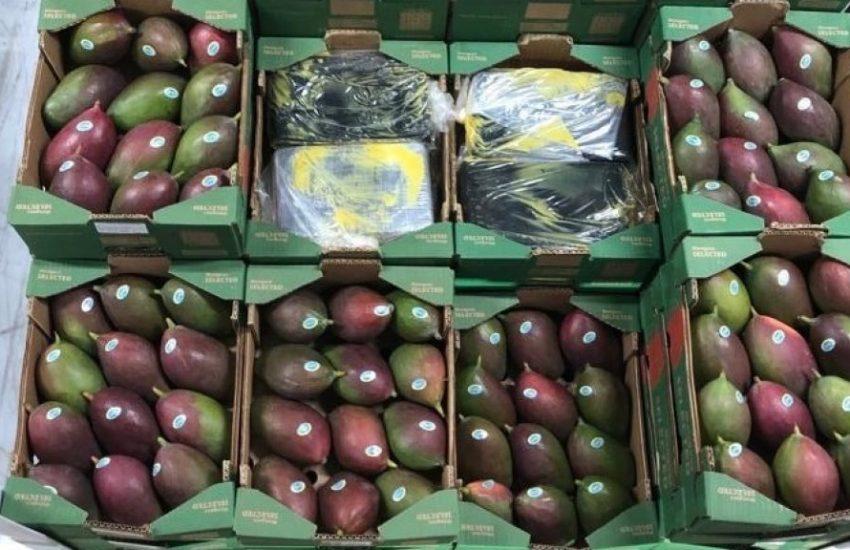 Cocaïne tussen mango's