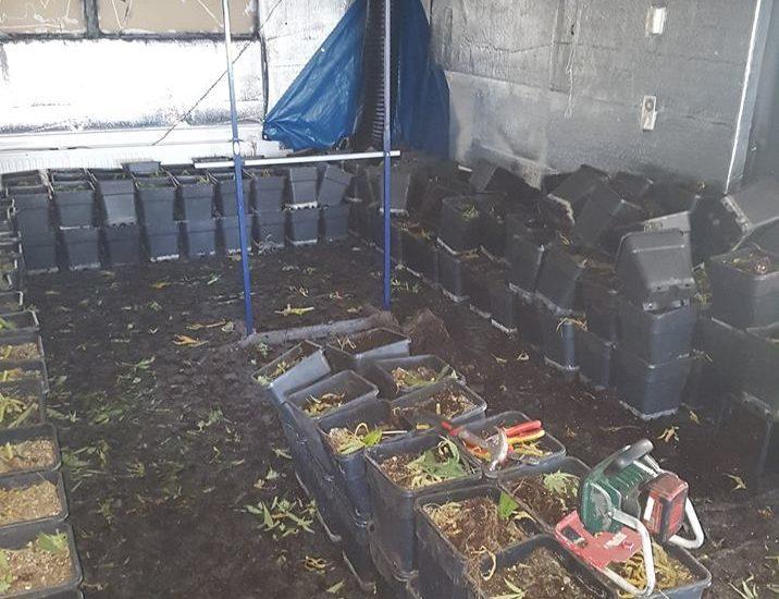 450 planten in flatwoning