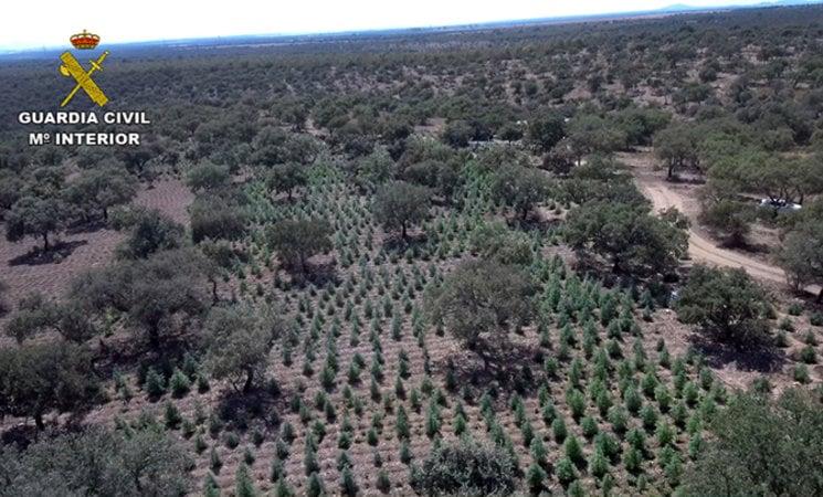 22000 planten