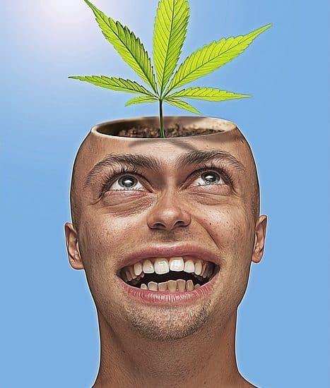 legaliseren softdrugs