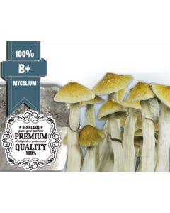 Paddo kweekset - B+ 100% Mycelium