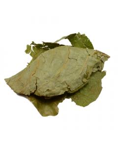 Banisteriopsis Caapi blad [Ayahuasca]