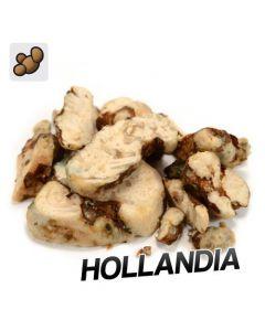 Magic truffels Hollandia