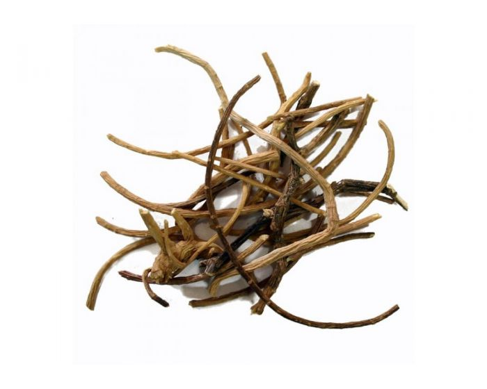 African dream root (Silene capensis)