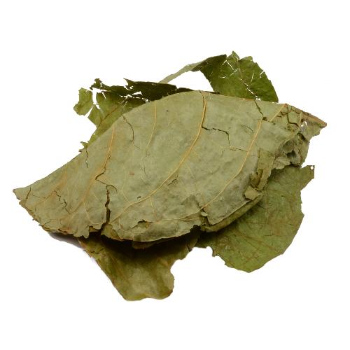 Banisteriopsis Caapi blad   Ayahuasca