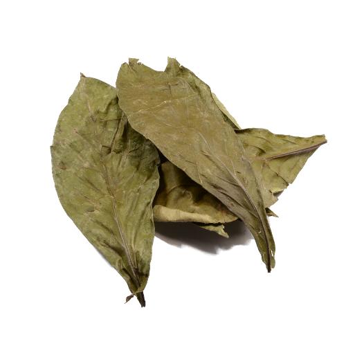 Psychotria viridis gedroogd